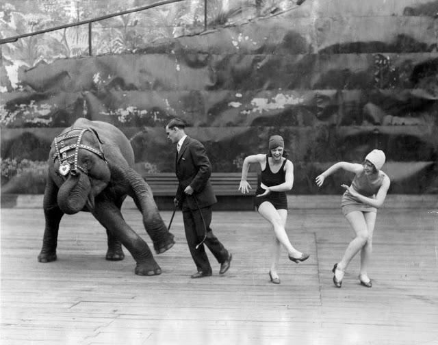 7341-1 Dansende olifant 1926