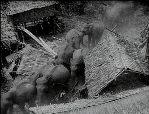 elephant-stampede-from-chang-1927